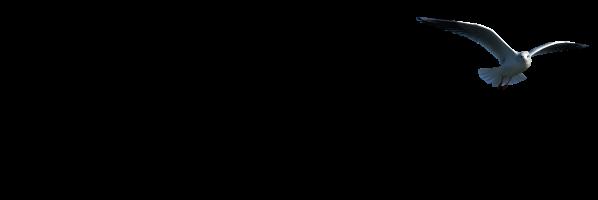 Neuharlingersiel-info